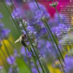 Ubuntu17.10日本語Remixにconky導入